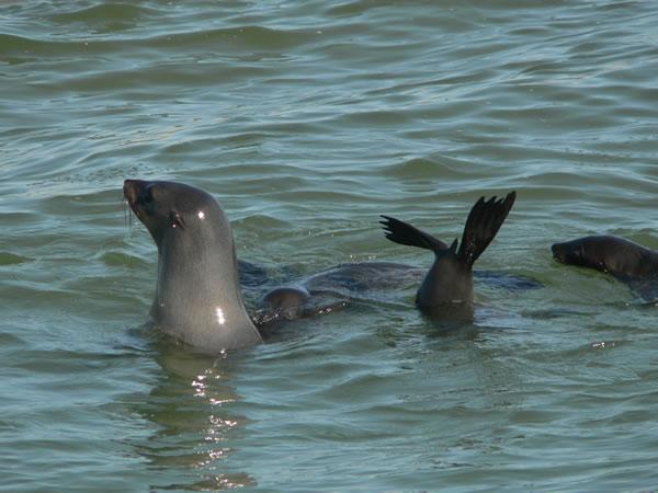 Seals_fs