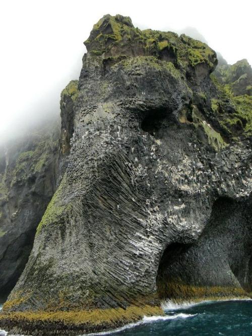 Elefante-acantilado-islandoa-shaefierce